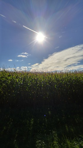 LG G4 corn
